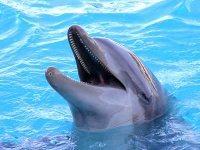 a_nagy_e-szamla_titok_delfin
