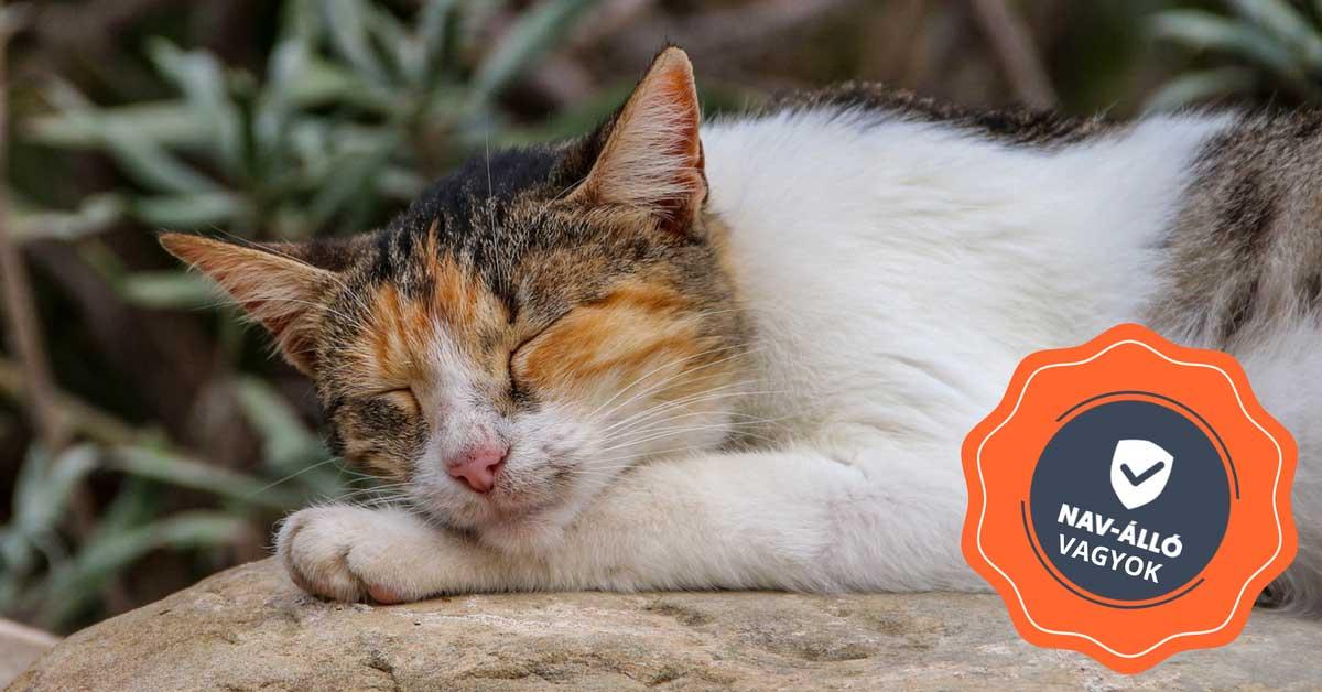 Nav online számlázás. Nyugodtan alvó macska.